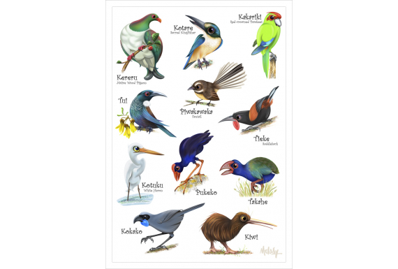 Love our Birds: Card
