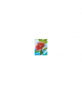 Pohutukawa Flower: Gift Card