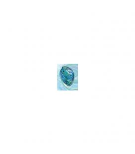 Paua Shell Gift Card