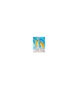 Gannet Couple Gift Card