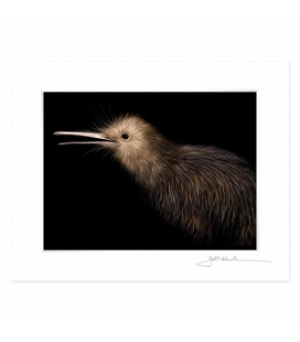 Little Brown Kiwi: 6x8 Matted Print