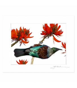 Tui in Flame Tree: 6x8 Matted Print