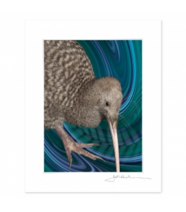 NZ Iconography, Great Spotted Kiwi: 6x8 Matted Print