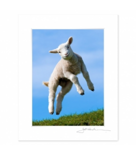 Leaping Lamb: 6x8 Matted Print