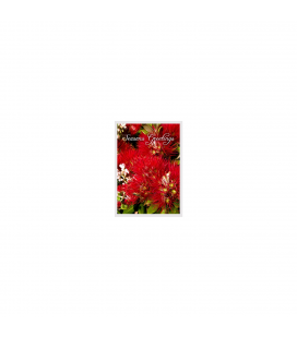 Mixed Card Pack - Christmas Cards: